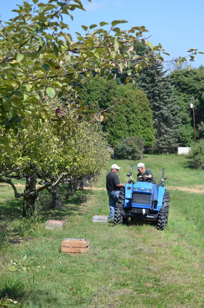 Kermit and John load apples on the tractor for washing and sorting.