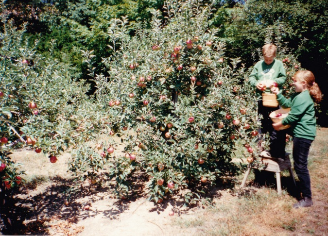 1995 | Taggart grandchildren pick apples.